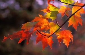 November-Fall-4